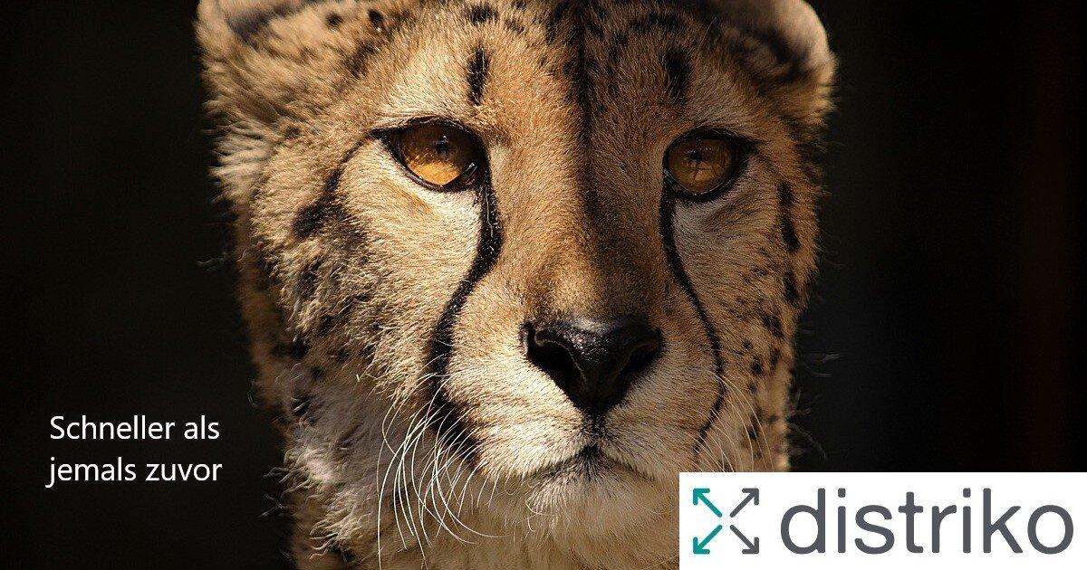 Ein Gepard als Zeichen für Geschwindigkeit der Mobile First Website distriko.de